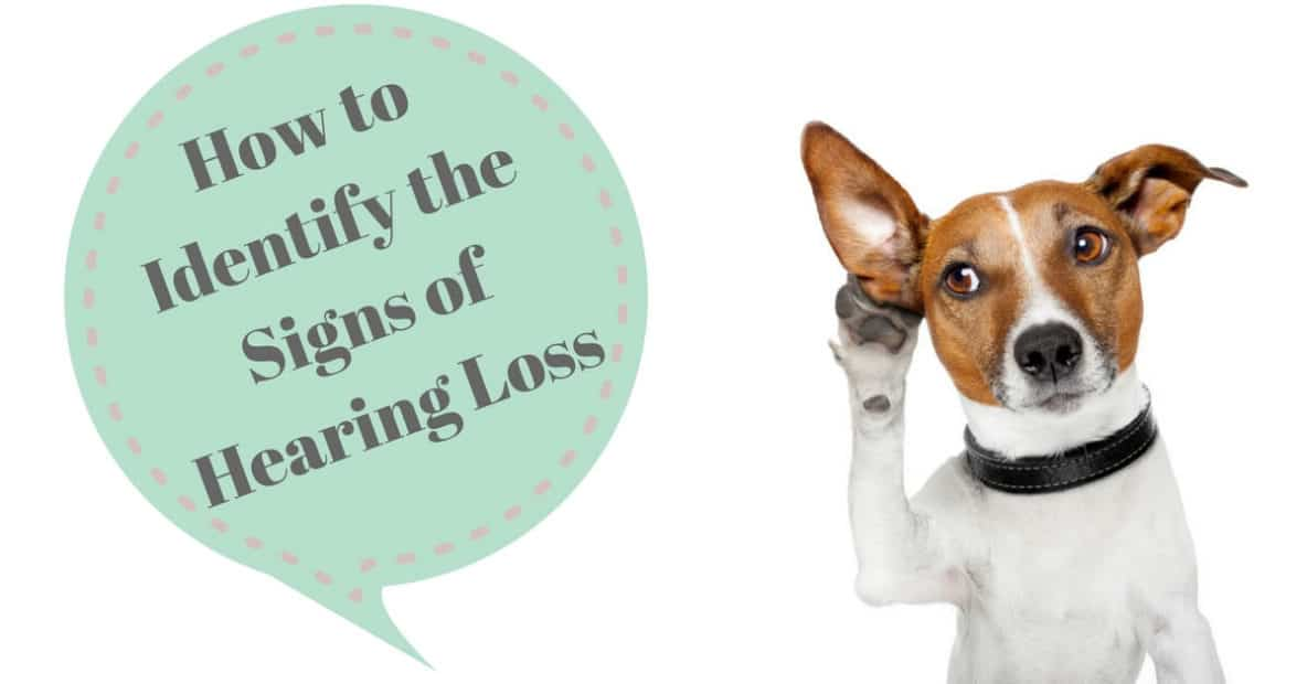 How to Identify the Signs of Hearing Loss